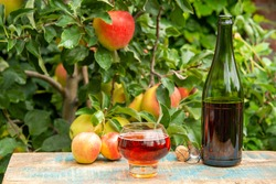 Glass of sweet rose apple cider from Normandy served in garden in France and green apple tree with ripe red fruits on background