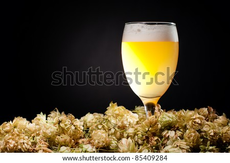 Glass of white beer with hop over black