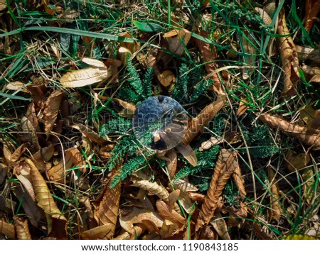 Stock Photo Glass round ball on the ground with fallen autumn leaves close-up
