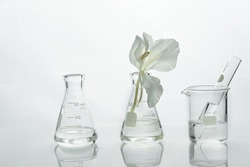 glass science flask and beaker with water and white soft natural flower for cosmetic research laboratory background
