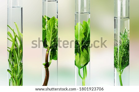 Glass test tubes with herbal in the biotech laboratory Stock fotó ©
