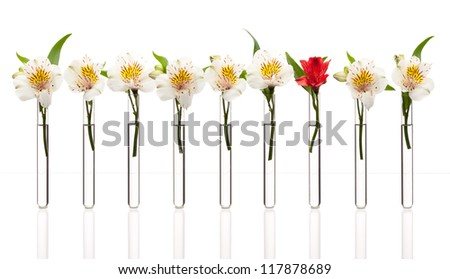 Glass test tubes with white flowers except one that is red standing in line, isolated on white. Concept of individuality, creativity, one-of-a-kind.