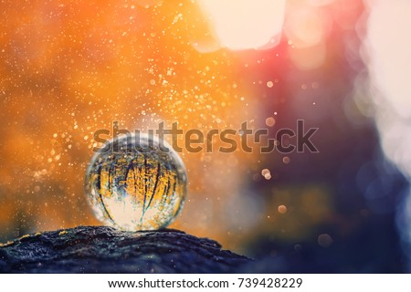 glass transparent ball (sphere) from reflection of trees on blurred natural background. blurred abstract autumn scene. beautiful still life with glass ball on background of nature.