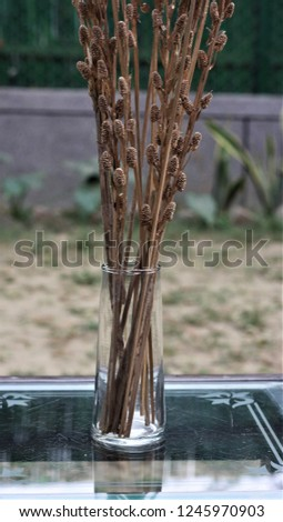 Glass vase decorative purpose and a dry flower. #1245970903