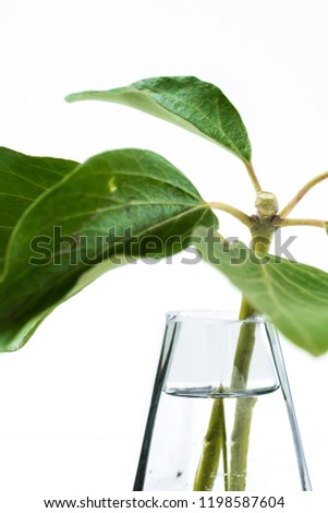 Glass vase, tree or flower #1198587604