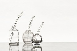 Glass vases with branches on a white background
