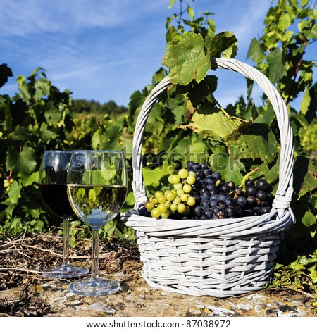 glasses of white and red wine and grappes in basket