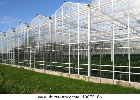 Glasshouse in Holland
