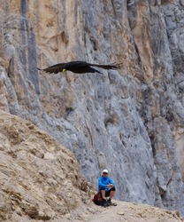 Gliding chough above a resting tourist, Dolomites