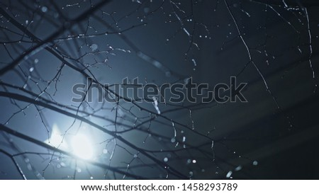 Glistening bare leafless wet snowy branches on a tree in moonlight glistening in the backlit light of the moon on a cold atmospheric misty or foggy winter night