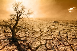 Global warming, arid, dehydrated, dead trees
