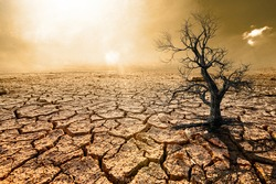 Global warming, arid, dry soil, cracked rift, dead trees