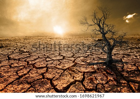 Global warming, arid, dry soil, cracked rift, dead trees Сток-фото ©
