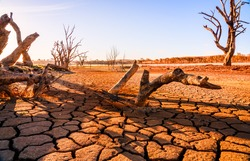 Global warming concept. dead tree under hot sunset,  drought cracked desert landscape
