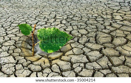 Global warming on Earth is a green plant fights for life during drought. Ecology concept - plant fighting drought land.