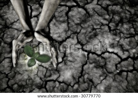 global warming theme human hands defending green grass sprout rising from rainless cracked ground