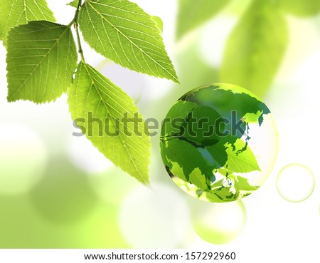 Globe and green leaves in sunlight