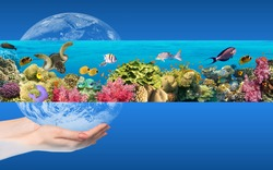 Globe in human hand against blue sky. Environmental protection concept. Underwater world. Coral fishes of Red sea