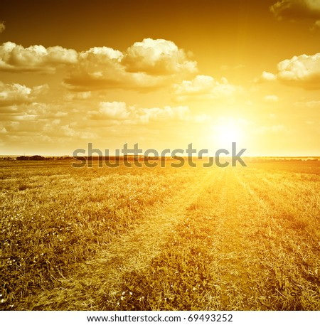 Gloomy dawn in gold field of grass and  rural road.