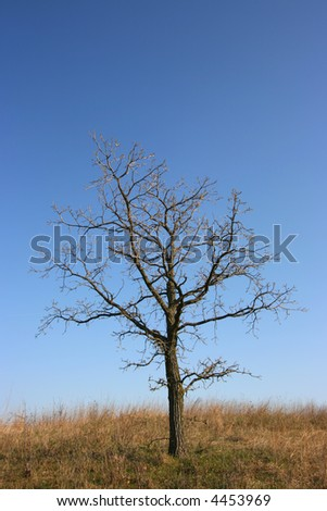 Gloomy, dead tree with blue sky in a yellow field