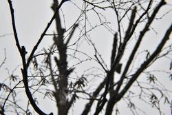 Gloomy, dreary, dark forest sky