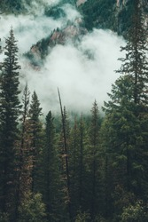 Gloomy foggy scenery with rocky mountain behind coniferous trees in low cloud. Atmospheric ghostly forest in dense fog among rocks. Alpine mysterious landscape at early morning. Hipster, vintage tones