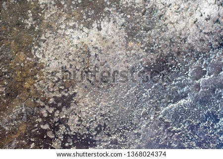 Gloomy grungy background with mold #1368024374