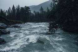 Gloomy rainy landscape with powerful mountain river in heavy rain. Dark atmospheric view to turbulent rapids in rainfall. Mountain creek in dark forest in downpour. Powerful mountain river in rain.