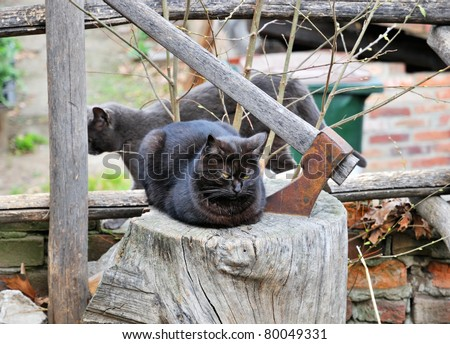 Gloomy scene from urban life - black cat with yellow eyes on piece of wood and axe beside