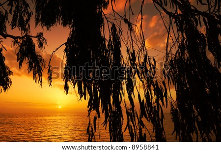 Glorious Mediterranean sunset framed by hanging leaves from a beach tree