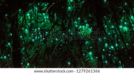 glow worms at night