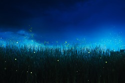 glowing fireflies on a grass filed at night
