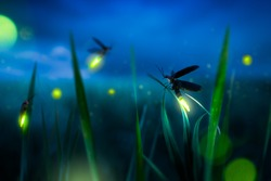 glowing firefly on a grass filed at night