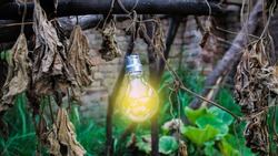 Glowing light bulb hanging down from a tree and autumn leaves