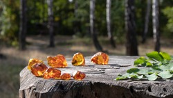 Glowing unprocessed pieces of natural Baltic amber(amber stone) are beautifully laid out in a circle on an old stump. The lovely birch forest is on the background. It has an idyllic summer atmosphere.