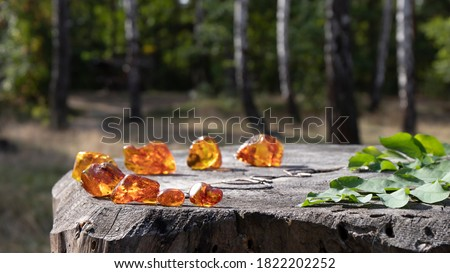 Glowing unprocessed pieces of natural Baltic amber(amber stone) are beautifully laid out in a circle on an old stump. The lovely birch forest is on the background. It has an idyllic summer atmosphere. Сток-фото ©