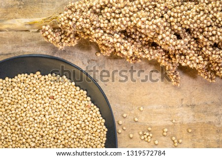 gluten free white sorghum grain on a pbalc plate and a cluster of seeds