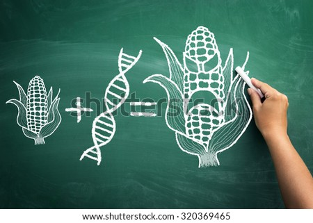 gmo concept gmo concept on a blackboard #320369465