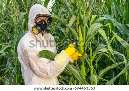 GMO scientist in coveralls and gas mask genetically modifying corn with syringe at maize field #694463563