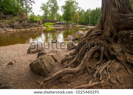 Gnarled roots of tree near stream and bridge nature park scene gooseberry falls