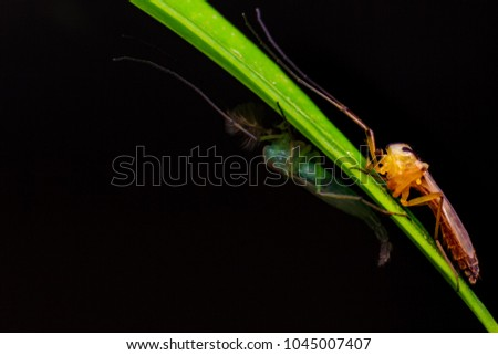 Gnats fruit flies on green leaf from macro photography with blurry dark background #1045007407