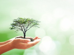 Go green concept: Human hands holding big growth tree over blurred nature background