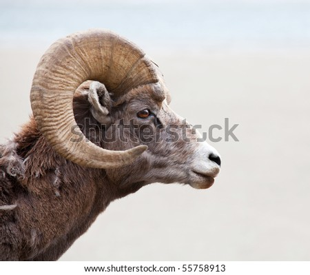 Stock Photo goat