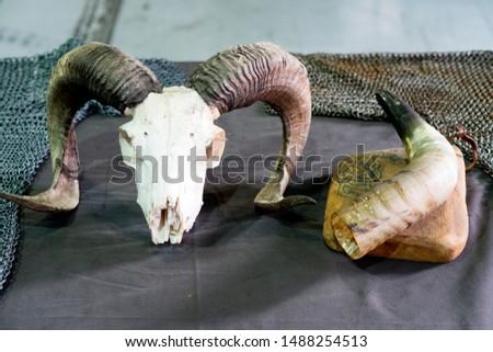 Goat and bull horns and skull #1488254513
