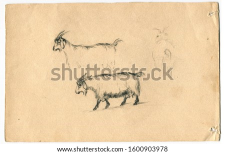 Goat drawing.Old sketches and drawings of a professional artist on white paper.