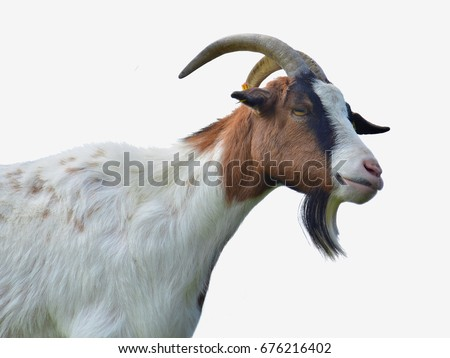 Goat. Head of a goat, isolated #676216402