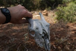 Goat skull found on a recent mountain trip