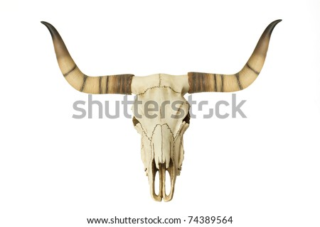 Goat Skull isolated on white - stock photo