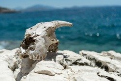 Goat skull with horns and the sea on the background