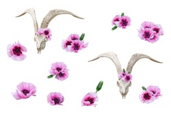 Goat white skull and pink garden poppies. Clip art set on white background